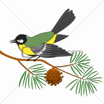 Titmouse on a pine branch