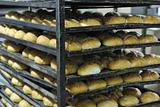 bread factory production