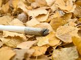 Cigarette on foliage