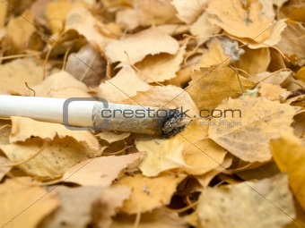 Cigarette on foliage