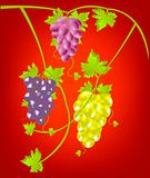 Grapevine on red background