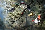 Buddhist prayer flags in a tree