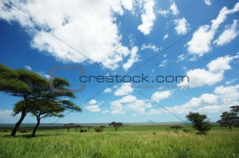Africa landscape, clear blue sky