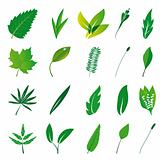Collection of isolated green leaves
