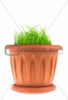 Pot with green grass