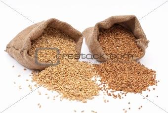 Burlap sack with wheat grain and buckwheat