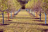 Tree rows in the park