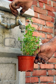 Watering a pot