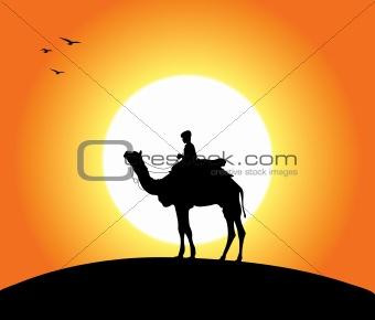 Camel At Sunset