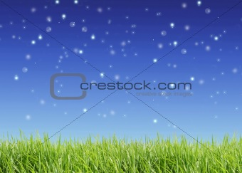 Close up of the green grass on  sky background