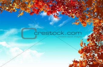 autumn yellow leaves in sun rays and blue sky