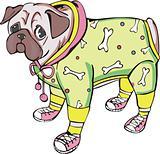 Dressed pug-dog