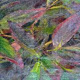 Leaves on a canvas