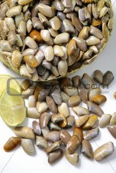 culin clams