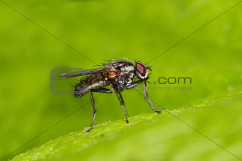 small fly on the leaf