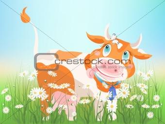 Chamomile cow