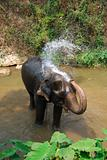 Elephant taking a shower