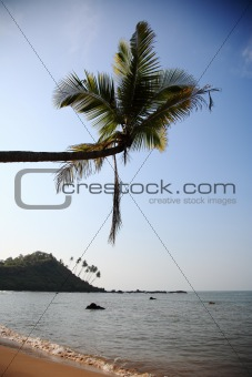 Tropical beach in Goa, India