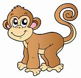 Cute small monkey