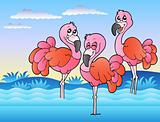 Three flamingos standing in water
