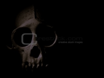 Skull in Deep  Shadow