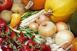 Harvest. Fresh ripe vegetables: tomatoes, pumpkins, onion, peppe