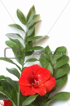 Bouquet with bright red lily and big green leaves