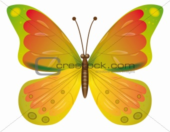 A beautiful yellow butterfly isolated.  EPS10 Vector