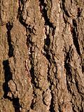 Rough brown bark