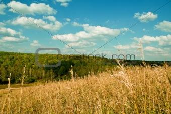 Beautiful rural landscap