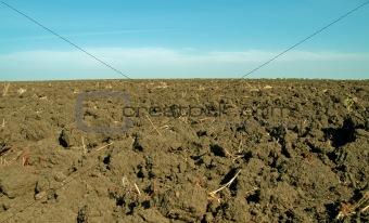 Moist, fertile soil in the summer