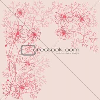 Cosmea flowers outline