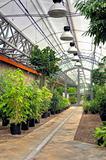 Flowers in modern greenhouse