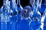 Animal tests