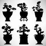 Bonsai Tree Plant Flower Pot