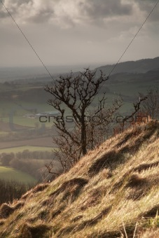 Single tree, Sutton Bank