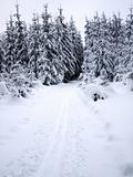 Snowy forest and cross-country ski trail