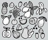 hand draw fruit