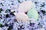 Easter Eggs Hidden in Spring Flowers