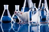 Rat, Animal Laboratory
