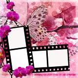 Butterflies and orchids flowers background  with film frame