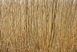 texture of the old dry sedge