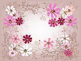 Cosmea frame