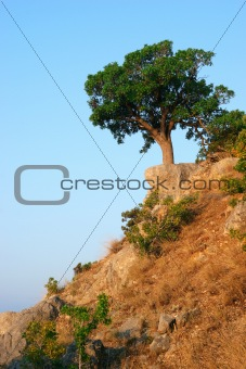 Single tree standing on the hill