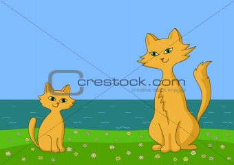 Cat and kitten on sea coast