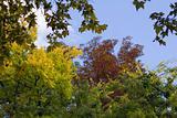 Autumn trees, leaf