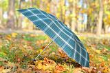 green umbrella over colorful autumn leaves