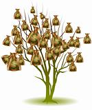 Money Bag Tree