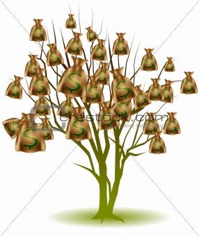 Money Bag Tree