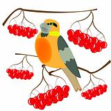 Birdie and berries of rowanberry